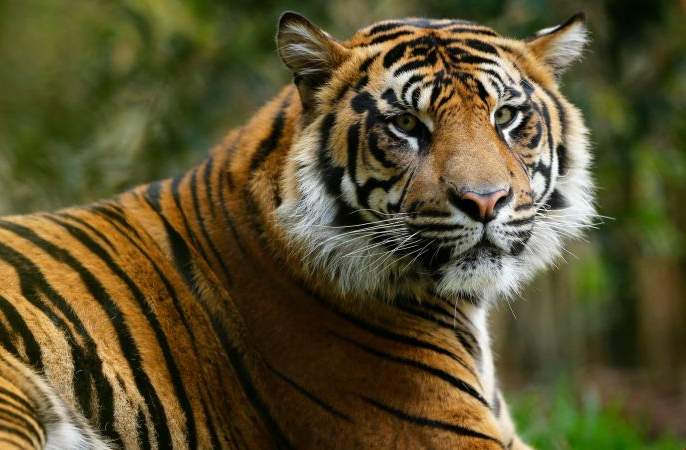 Promotion of the forest for 'Tiger Ambassador' in Nagpur forest area | नागपूर वनपरिक्षेत्रातील 'व्याघ्रमित्र' करणार जंगलाचे संवर्धन