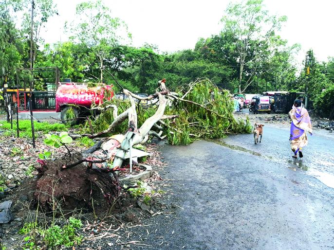 Damage area beyond four lakh hectares   नुकसानीचे क्षेत्र चार लाख हेक्टरच्याही पुढे