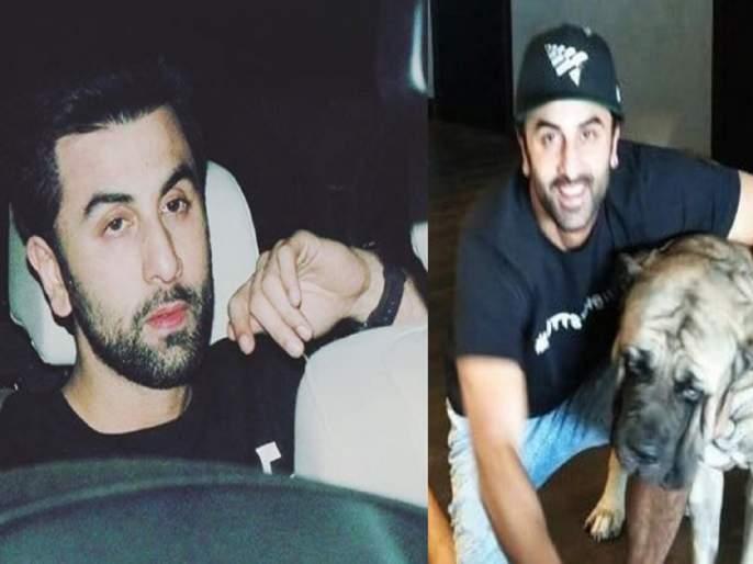 ranbir kapoor bitten by his pet dog and actor rushed to visit a hospital   रणबीर कपूरला पाळीव कुत्र्यानेच घेतला चावा, अभिनेता पोहोचला रूग्णालयात