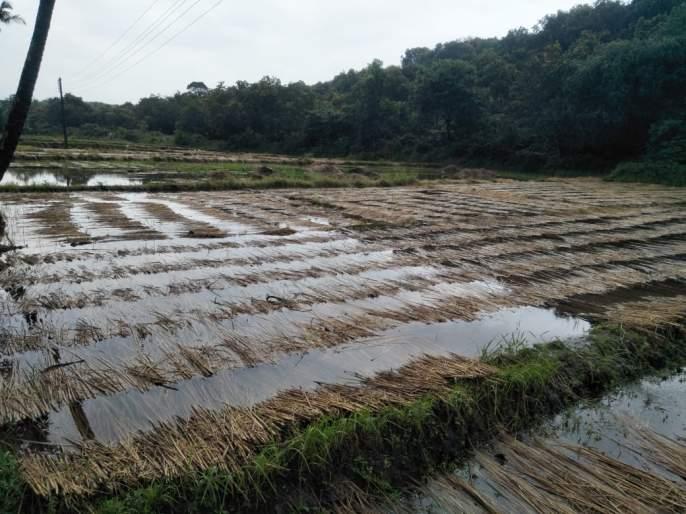 Waiting for wet drought to be announced | ओला दुष्काळ जाहीर होण्याची प्रतीक्षा, अवकाळीने शेतकरी कोलमडला