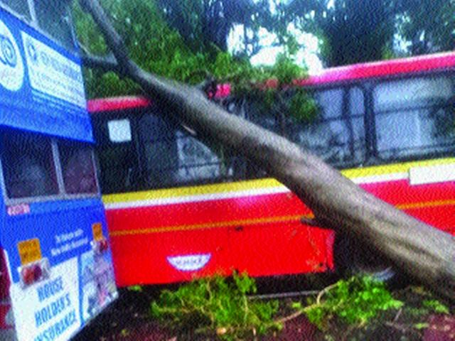 Thaiman, along with the wind, also hit the Konkan; The tree was uprooted | वादळी वाऱ्यासह थैमान, कोकणालाही झोडपले; वृक्ष उन्मळून पडले