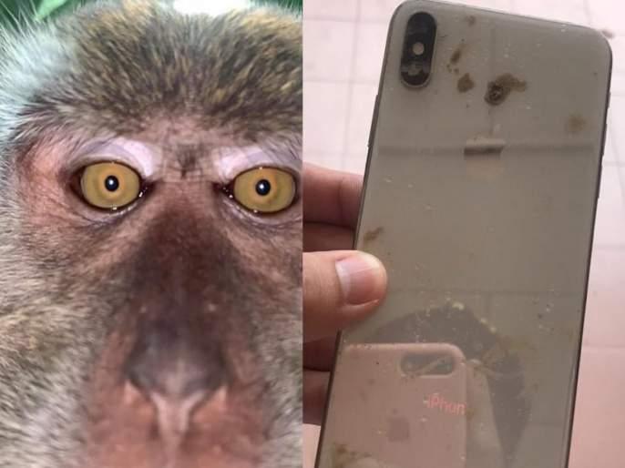 After retrieving his missing phone man finds it full of monkey selfies | VIDEO : चोरी गेलेला फोन सापडला जंगलात, गॅलरी चेक केल्यावर जे दिसलं ते पाहून बसला धक्का!