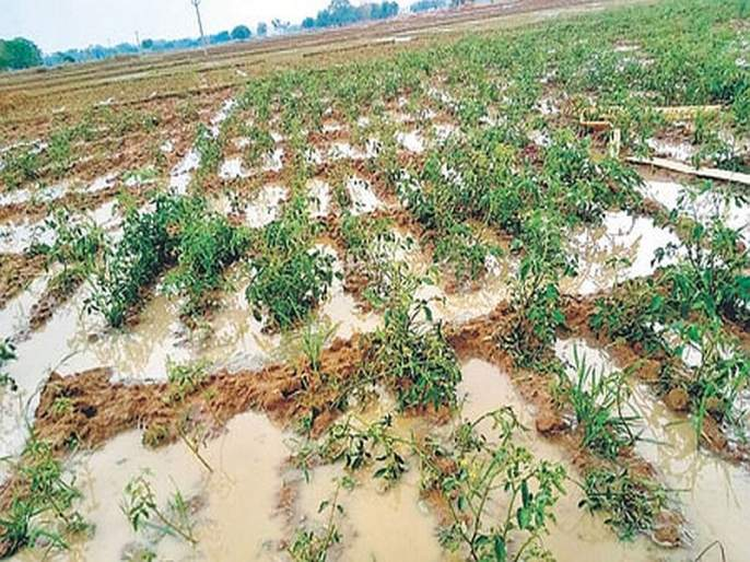Farmer dies of heart attack after crop down under rain water in beed | हातचे पीक गेल्याच्या धसक्याने शेतकऱ्याचा हृदयविकाराने मृत्यू