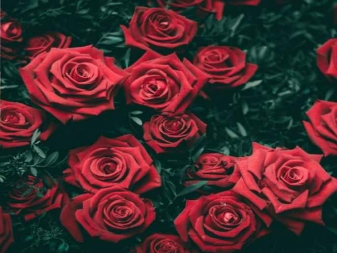 HISTORY OF ROSE | Rose Day 2018: जाणून घ्या गुलाबाचं फूल कसं बनलं प्रेमाचं प्रतीक?