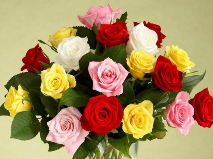 Rose Day 2018: valentine week 2018 rose day interesting facts | Rose Day 2018 : कोट्यवधी रुपयांचं आहे हे गुलाब, जाणून घ्या आणखी काही अशाच गोष्टी