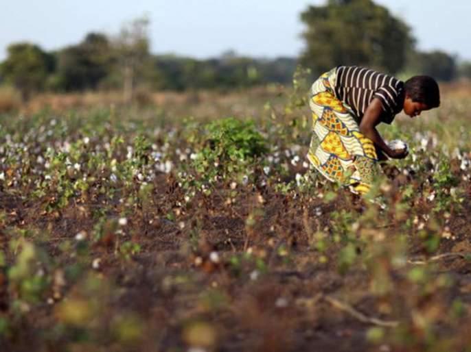More than 60% of the children in Maharashtra are working as farm workers, Crores report | महाराष्ट्रातील ६० टक्क्यांहून अधिक बालकामगार करतात शेती, क्रायचा अहवाल