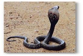 Have you ever seen a gnawing snake? | गरागरा फिरणारा साप पाहिलायका?