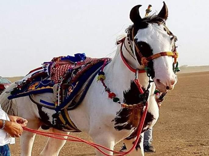 Owner refuses Salman Khan Rs 2 crore offer for rare breed horse | 'या' घोड्यासाठी सलमानने लावली २ कोटींची बोली; त्यावरचं मालकाचं उत्तर ऐकून चक्रावून जाल!