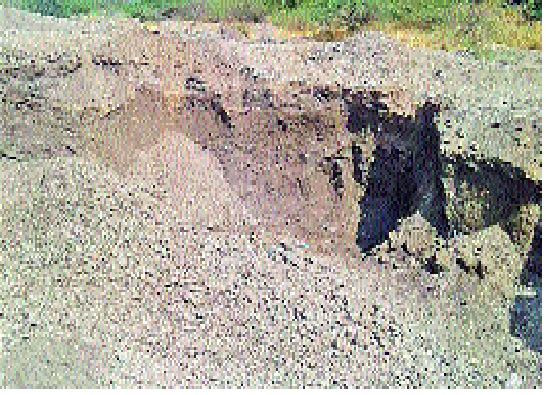 One arrested for sand theft in Somerset: Theft of all-purpose sand | सोमर्डीत वाळू चोरीप्रकरणी एकाला पकडले : सव्वालाखाची वाळू चोरी