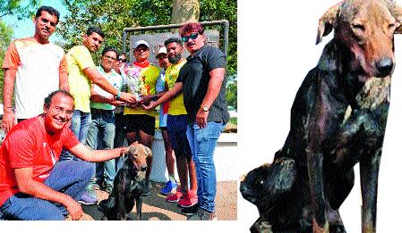 The wanderers paid tribute to the martyr   भटक्या श्वानाची शहिदांना अनोखी आदरांजली : १३० किलोमीटरचे अंतर कापत दौड पूर्ण