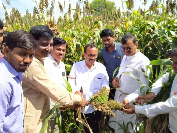 Guardian Minister Atul Save inspects the crop damage in Sengaon taluka | सेनगाव तालुक्यातील पिक नुकसानीची पालकमंत्र्यांकडून पाहणी