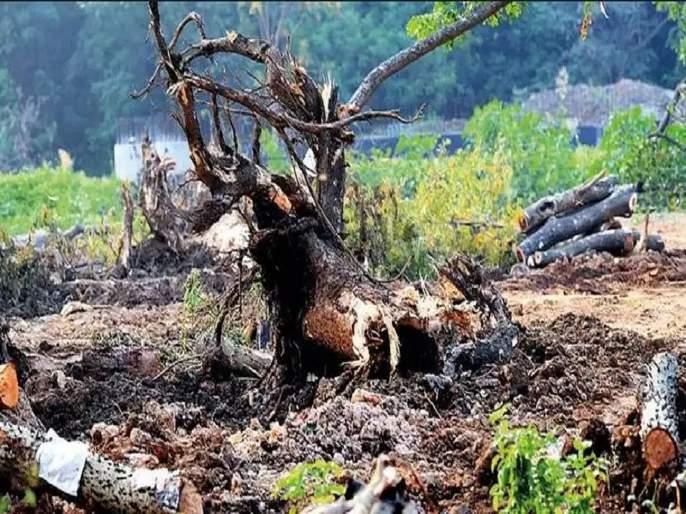 Opposition to the Aarey Carshed for environmental protection | पर्यावरणाच्या जतनासाठीच आरे कारशेडला विरोध