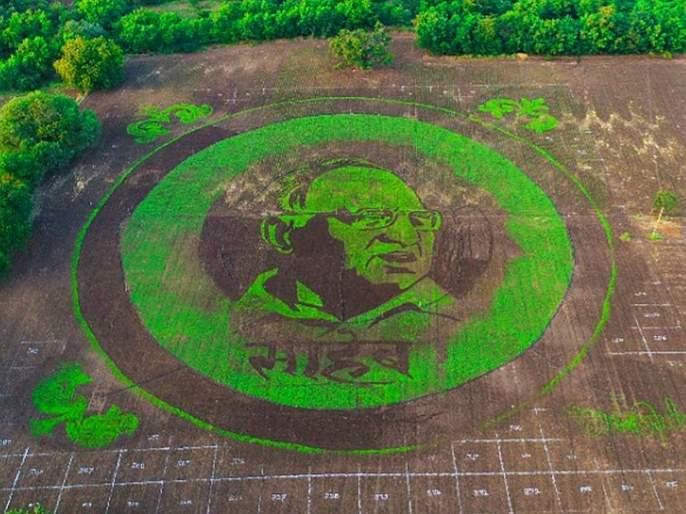 Image of Sharad Pawar grafted by six hundred kilograms of seed on an area of 4.5 acres | साडेचार एकर क्षेत्रावर सहाशे किलो बियाण्याद्वारे साकारली शरद पवार यांची प्रतिमा