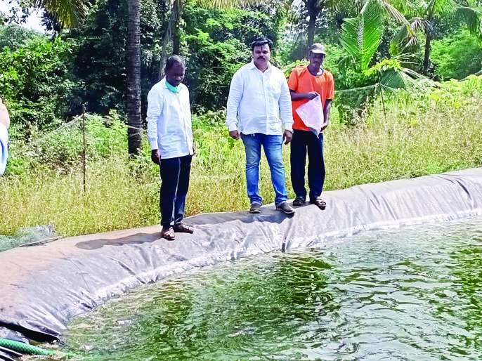 Successful fish farming in Chakka Farm   चक्क शेततळ्यात मत्स्य शेती यशस्वी