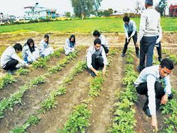 Agricultural education must be compulsory to class X | दहावीपर्यंतच्या शिक्षणात कृषीविषयक अभ्यासक्रम अनिवार्य करावा !