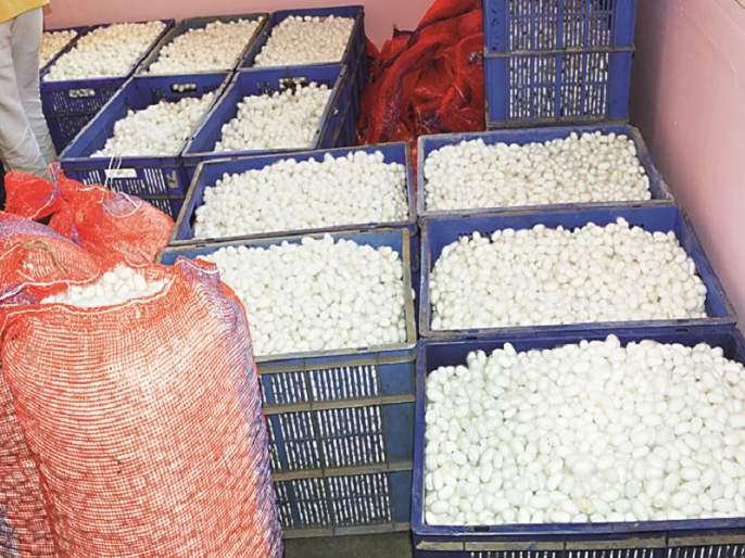 Farmers of Jalna have got a Silk cocoon market | जालन्यातील शेतकऱ्यांना रेशीम कोष बाजारपेठ ठरली वरदान