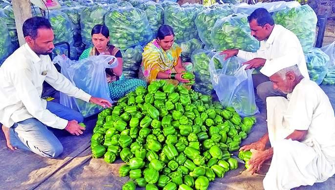 Simla chilli yields about one million in six months | सिमला मिरचीतून सहा महिन्यांत तब्बल दहा लाखांचे उत्पन्न