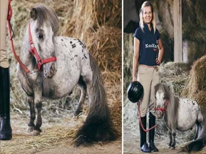 Smallest horse in the world lives in poland   'हा' आहे जगातला सर्वात कमी उंचीचा घोडा, जाणून घ्या त्याची उंची...