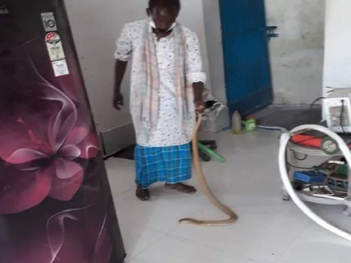 34 Snakes came out with serpent from the house in darbhanga | आंघोळ करताना सापाने व्यक्तीच्या पायालाच घातले वेटोळं, तर ३४ सापांची पिल्ल घरभर होती फिरत