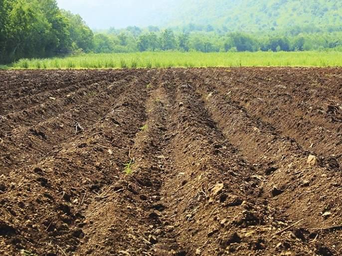 In Vidarbha soil, decrease nitrogen, phosphorus, zinc!   विदर्भातील जमिनीत अन्नद्रव्य,स्फ ूरद,जस्त घटले !