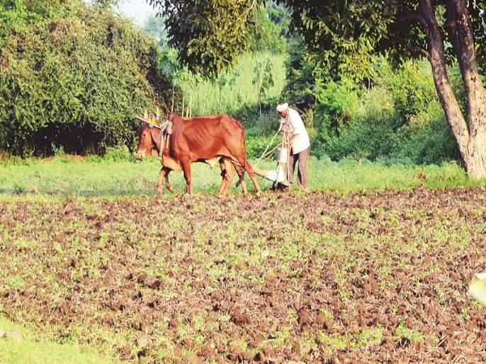 Double sowing crisis due to heavy rainfall in Beed district | बीड जिल्ह्यात अतिवृष्टीमुळे दुबार पेरणीचे संकट