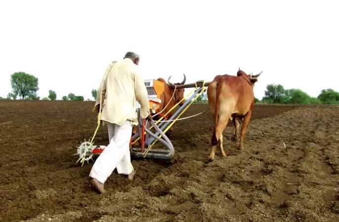 Rabi sowing in Hingoli district delayed | हिंगोली जिल्ह्यात रबीच्या पेरण्यांची उशिराने लगबग