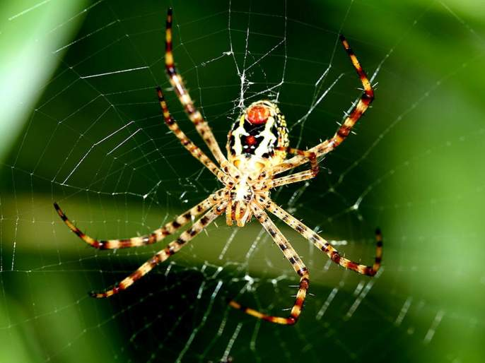 difference between spiders web and fishermans net | जाळं या कोळ्याचं नि जाळं त्या कोळ्याचं