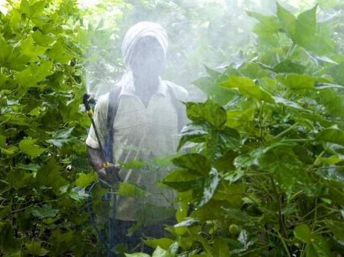 306 poisoned by spray in Akola district! | अकोला जिल्ह्यात फवारणीतून ३०६ जणांना विषबाधा!