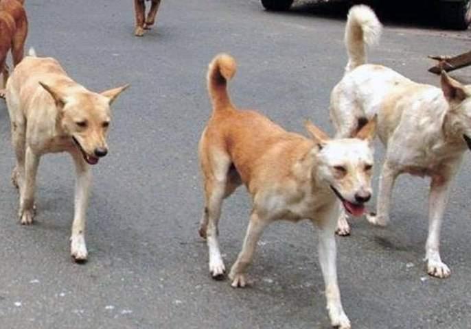 Akola Municipal Corporation will sterilize stray dogs | अकाेला महापालिका करणार भटक्या श्वानांची नसबंदी