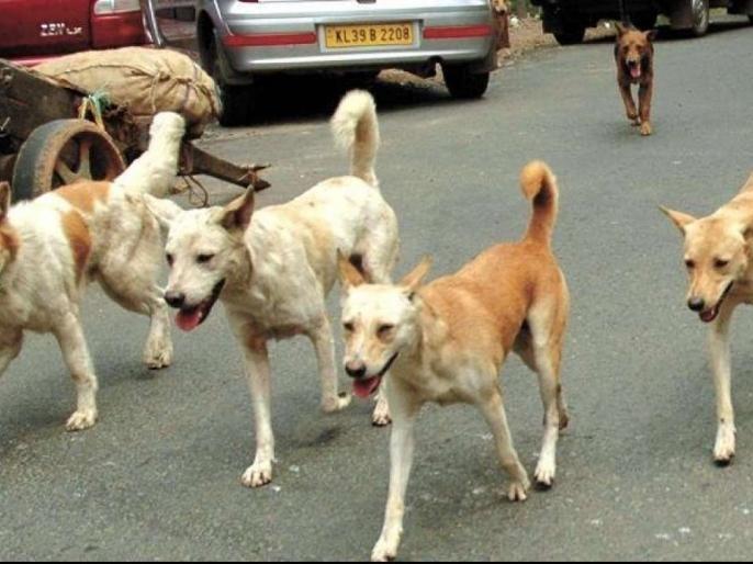 What are the measures to control the dogs? High Court asked | कुत्र्यांच्या नियंत्रणासाठी काय उपाययोजना करताय? हायकोर्टाची विचारणा