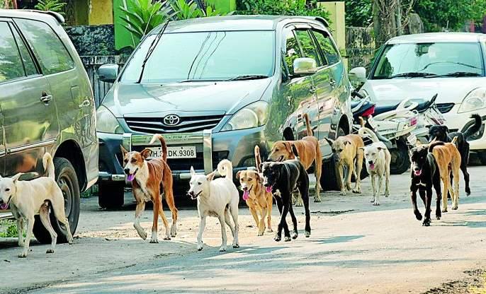 Sterilization campaign on stray dogs in Nagpur | नागपुरात मोकाट कुत्र्यांवर नसबंदी मोहीम