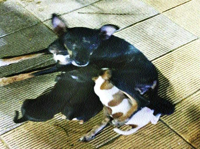 The five puppies of the dog remain intact; The Malad police started investigations | श्वानाच्या 'त्या' पाच पिल्लांचे गूढ कायम; मालाड पोलिसांकडून तपास सुरू