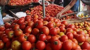 Tomatoes Rs 35 per kg; Year after year rate improvement | टमाटा ३५ रुपये किलो; वर्षानंतर दरात सुधारणा
