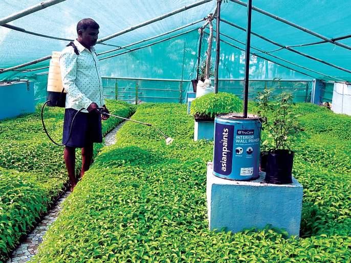 Terrace nursery for chili plants; Increase in yield due to cash crop | मिरची रोपांसाठी टेरेस नर्सरी; नगदी पिकामुळे उत्पन्नात वाढ