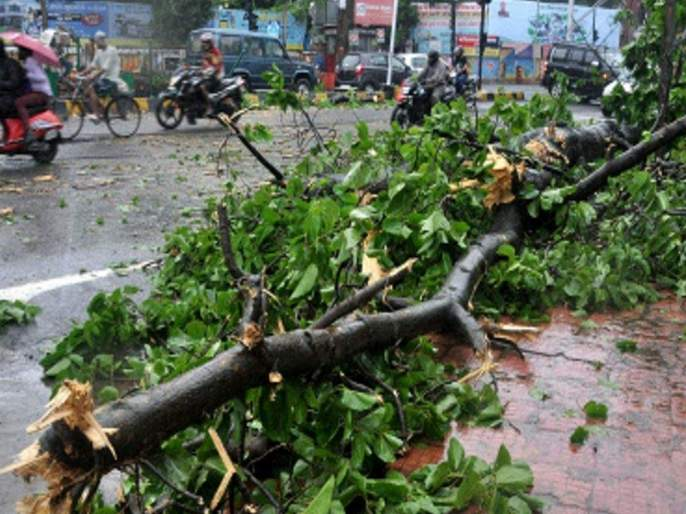 Drizzle of rain in the district; The trees collapsed | जिल्ह्यात पावसाची रिपरिप;झाडे कोसळली