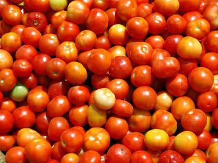 A large increase in the price of tomatoes; Due to low production, the rate reached Rs | टमाट्याच्या दरामध्ये मोठी वाढ; उत्पादन कमी असल्याने दर पोहोचले ५० रुपयांवर