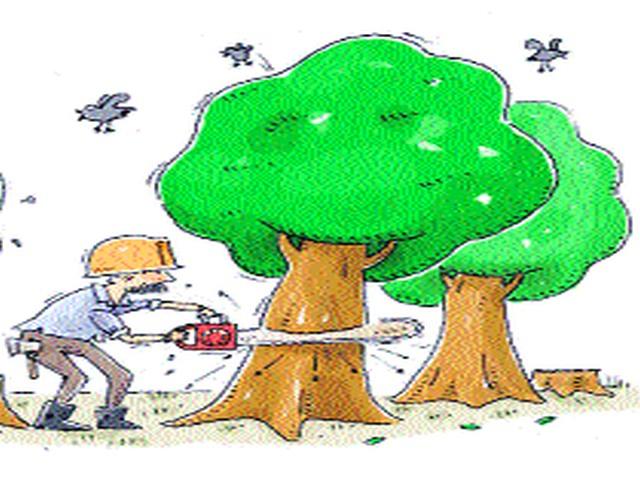 Dwarka to Bitko Chowk will cut down the trees | द्वारका ते बिटको चौक दरम्यान झाडे तोडणार