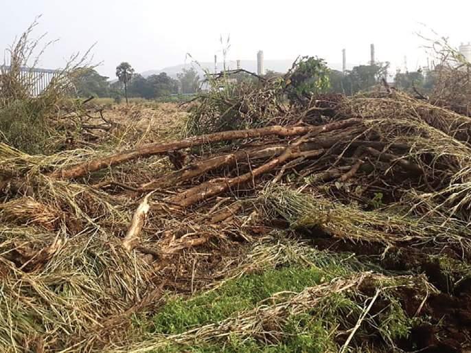Tree trunk in Taloja MIDC | तळोजा एमआयडीसीत वृक्षतोड