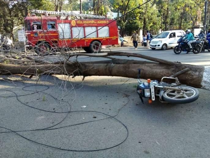 A fallen tree in Marathon Square; The two-wheeler rescued the child | मॅरेथॉन चौकात कोसळले झाड; दुचाकीस्वार बालंबाल बचावला