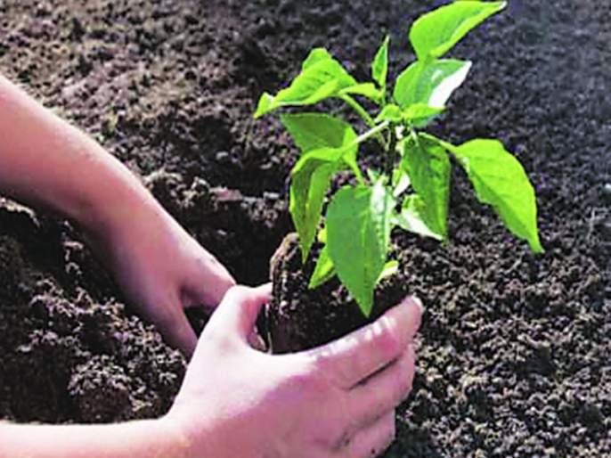 Zilla Parishad teachers are required to plant two trees   जिल्हा परिषदेच्या शिक्षकांना दोन झाडे लावणे बंधनकारक