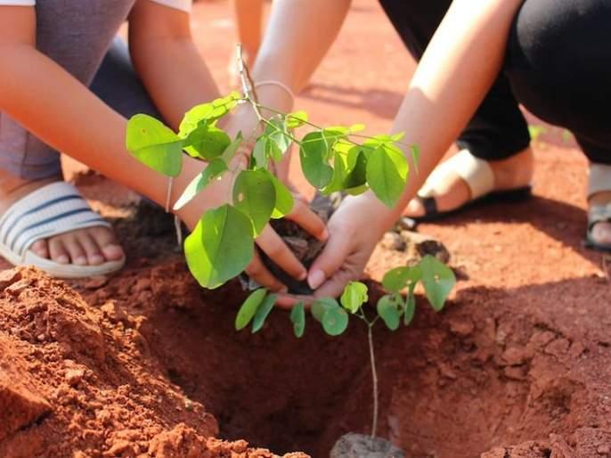 Don't get paid for tree planting! | वृक्ष लागवडीचे पैसे मिळालेच नाही!