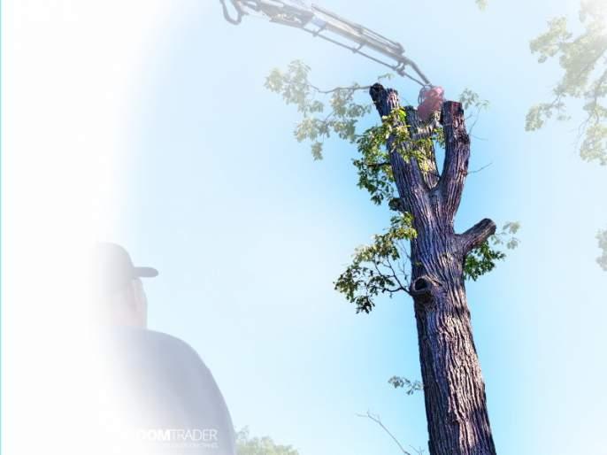 thirteen Thousands of trees death for development works in pune | पुण्यात विकासकामांसाठी तेरा हजार झाडांचे मरण
