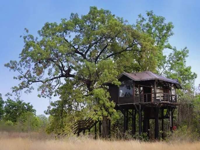 Sanctuaries, tourist destinations waiting for tourists; Tadoba at 50-60 percent   अभयारण्य, पर्यटन स्थळांना पर्यटकांची प्रतीक्षा;ताडोबा ५०-६० टक्क्यांवर