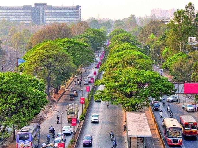 Only five thousand records of 50 thousand plants in the country - Sonal Patankar   देशात ५० हजार वनस्पतींपैकी केवळ पाच हजाराची नोंद - सोनल पाटणकर