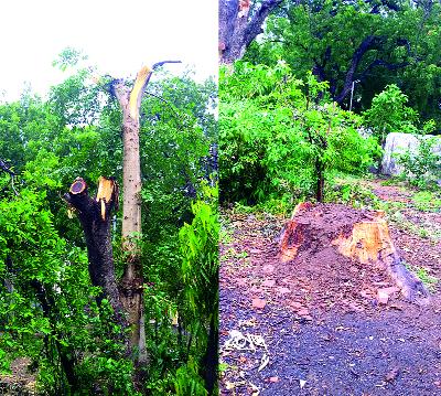40 trees in Kalyan were nailed, banner free | कल्याणमधील ४० झाडे झाली खिळे, बॅनरमुक्त