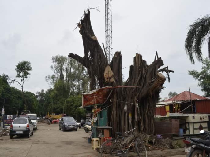A complaint has been filed in NGT for Tree trunks on dp road karvenagar at pune | पुण्यात कर्वेनगरच्या डीपी रस्त्यासाठी २५० वृक्षांवर कुऱ्हाड : एनजीटीकडे दावा दाखल