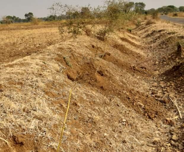 Trees disappears in Khaddgaon-Pimpalgaon area | खडदगाव-पिंपळगाव राजा क्षेत्रावरीलझाडे गायब!