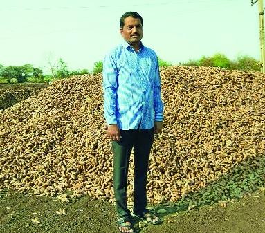 Haldi record production in Ardhapur taluka   अर्धापूर तालुक्यात हळदीचे विक्रमी उत्पादन