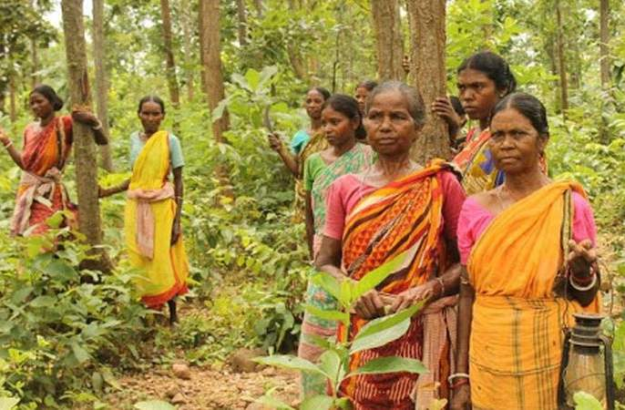 Appeals to the Divisional Commissioners can now be made for forest rights   वनहक्कासाठी आता करता येणार विभागीय आयुक्तांकडे अपील