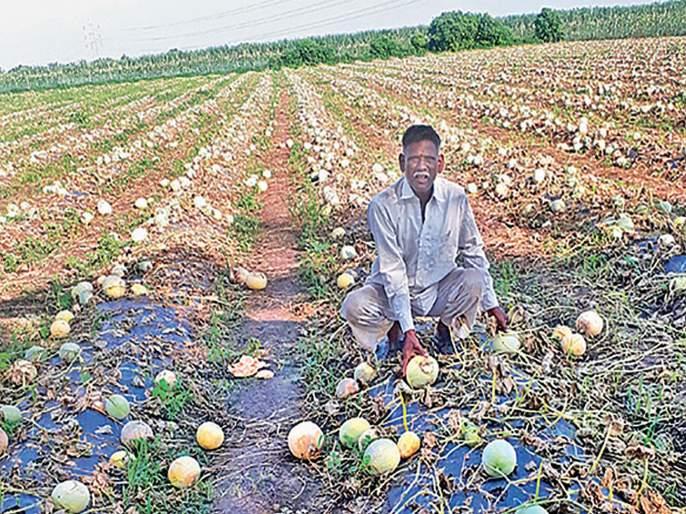 Rs. 3,000 / ha for rain-fed farmers; Governor's announcement | अतिवृष्टीग्रस्त शेतकऱ्यांना हेक्टरी ८ हजार रुपये मदत; राज्यपालांची घोषणा